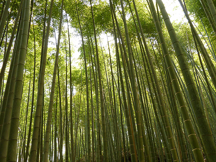 Arashiyama Sagano Bamboo Grove Kyoto Travel Tips - Japan ...