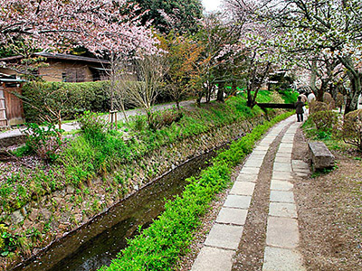 Philosopher's Walk In Kyoto