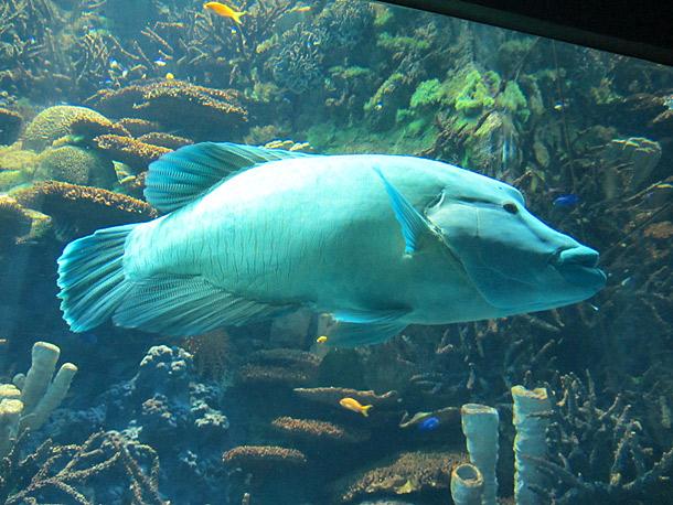 KAIYUKAN Aquarium Osaka Travel Tips - Japan Travel Guide - japan365days.com